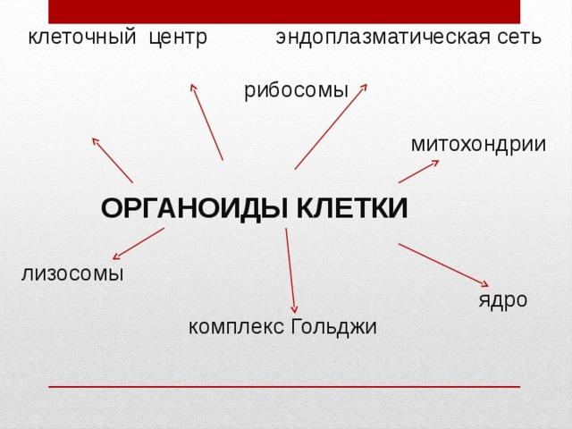 клеточный центр эндоплазматическая сеть  рибосомы  митохондрии    ОРГАНОИДЫ КЛЕТКИ   лизосомы  ядро  комплекс Гольджи