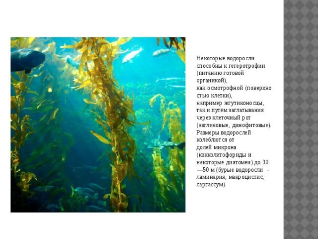 Некоторые водоросли способны к гетеротрофии (питанию готовой органикой), как  осмотрофной  (поверхностью клетки), например  жгутиконосцы, так и путём заглатывания через клеточный рот (эвгленовые,  динофитовые). Размеры водорослей колеблются от долей  микрона  (кокколитофориды  и некоторые  диатомеи) до 30 — 50 м (бурые водоросли  - ламинария,  макроцистис,  саргассум).