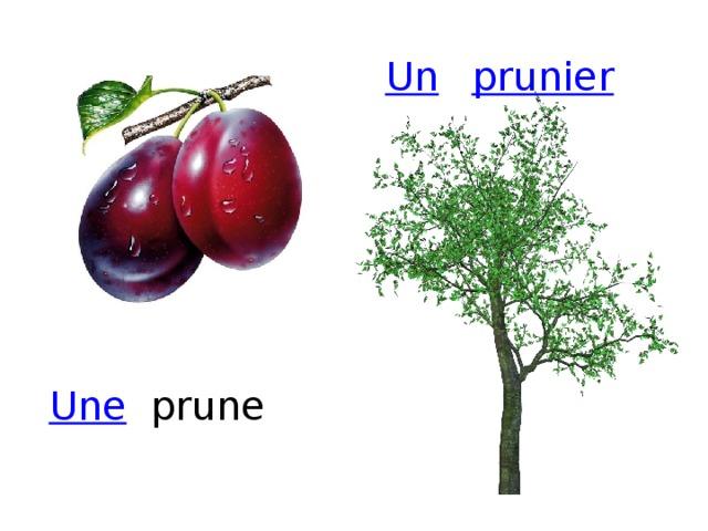 prunier Un prune Une