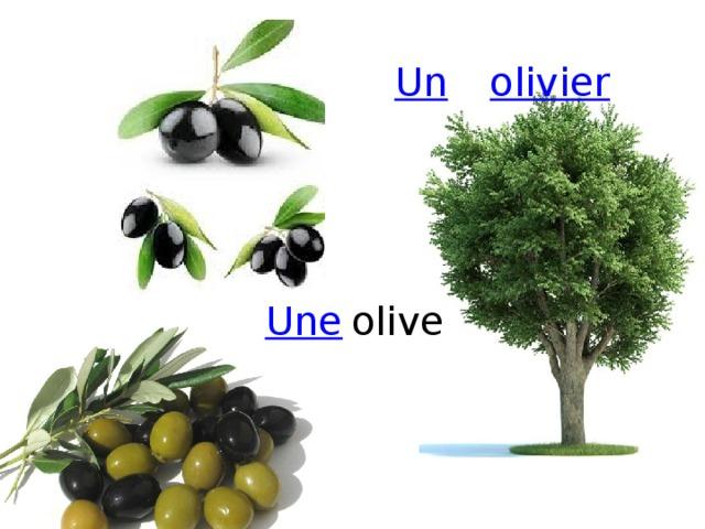 olivier Un olive Une