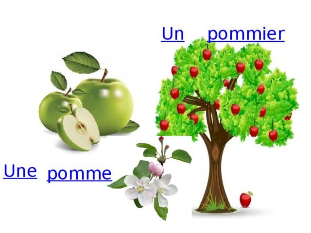 Un pommier Une pomme