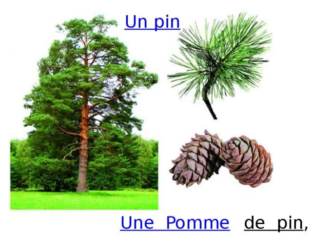 Un pin de  pin , Une  Pomme