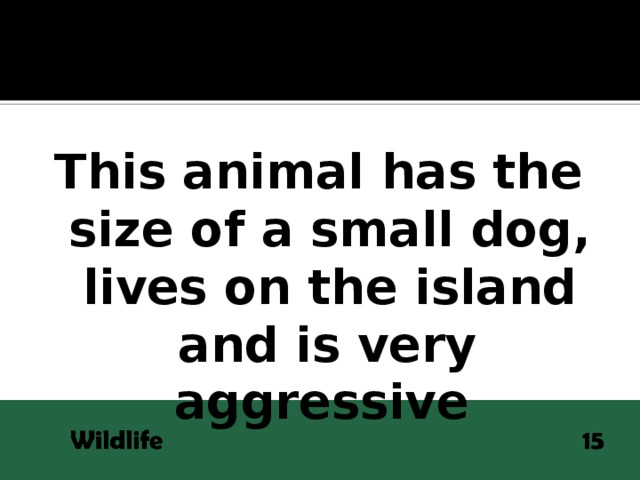 This animal has the size of a small dog, lives on the island  and is very aggressive
