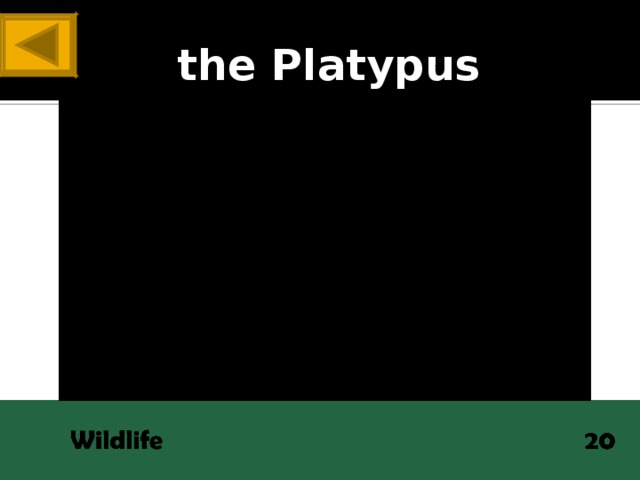 ANSWER the Platypus