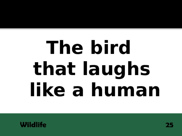 The bird that laughs  like a human