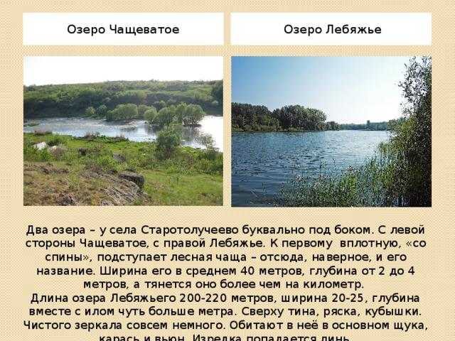 Озеро Чащеватое Озеро Лебяжье Два озера – у села Старотолучеево буквально под боком. С левой стороны Чащеватое, с правой Лебяжье. К первому вплотную, «со спины», подступает лесная чаща – отсюда, наверное, и его название. Ширина его в среднем 40 метров, глубина от 2 до 4 метров, а тянется оно более чем на километр. Длина озера Лебяжьего 200-220 метров, ширина 20-25, глубина вместе с илом чуть больше метра. Сверху тина, ряска, кубышки. Чистого зеркала совсем немного. Обитают в неё в основном щука, карась и вьюн. Изредка попадается линь.