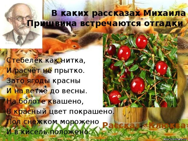В каких рассказах Михаила Пришвина встречаются отгадки Стебелёк как нитка, И расчёт не прытко. Зато ягоды красны И на ветке до весны. На болоте квашено, В красный цвет покрашено. Пол снежком морожено И в кисель положено. Рассказ «Клюква»
