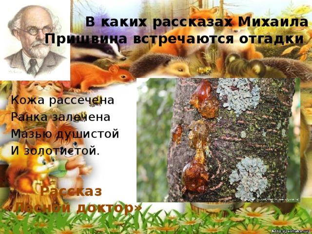 В каких рассказах Михаила Пришвина встречаются отгадки Кожа рассечена Ранка залечена Мазью душистой И золотистой. Рассказ «Лесной доктор»