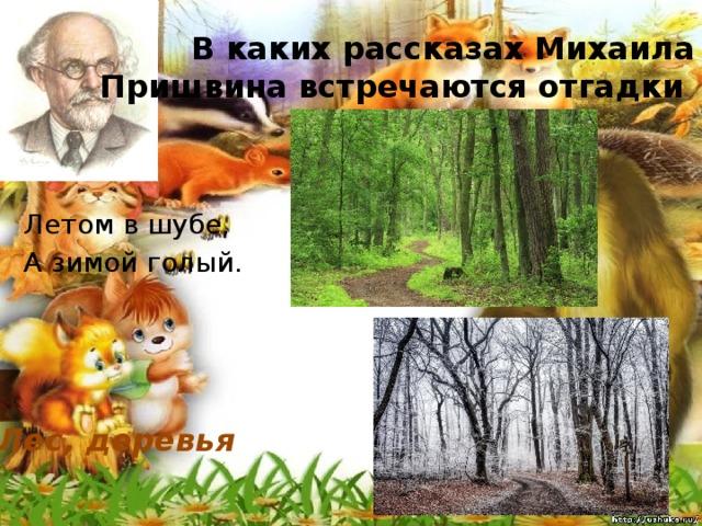 В каких рассказах Михаила Пришвина встречаются отгадки Летом в шубе, А зимой голый. Лес, деревья