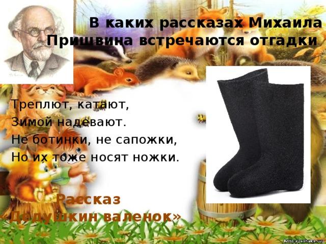В каких рассказах Михаила Пришвина встречаются отгадки Треплют, катают, Зимой надевают. Не ботинки, не сапожки, Но их тоже носят ножки. Рассказ «Дедушкин валенок»
