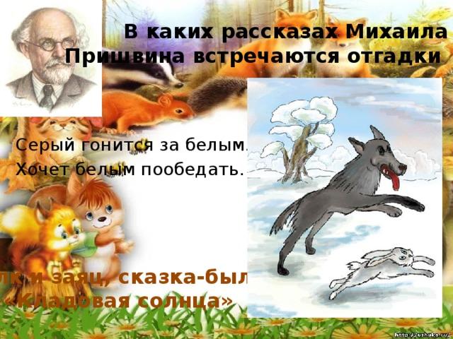 В каких рассказах Михаила Пришвина встречаются отгадки Серый гонится за белым. Хочет белым пообедать. Волк и заяц, сказка-быль «Кладовая солнца»