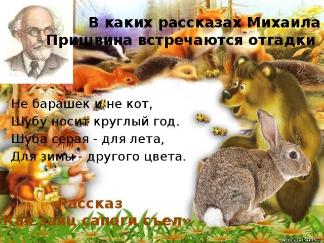 В каких рассказах Михаила Пришвина встречаются отгадки Не барашек и не кот, Шубу носит круглый год. Шуба серая - для лета, Для зимы - другого цвета. Рассказ «Как заяц сапоги съел»