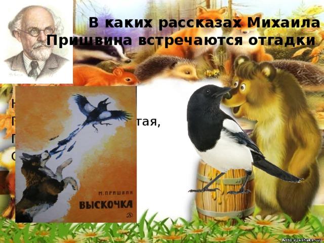 В каких рассказах Михаила Пришвина встречаются отгадки Непоседа пёстрая, Птица длиннохвостая, Птица говорливая, Самая болтливая.