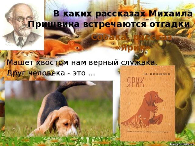 В каких рассказах Михаила Пришвина встречаются отгадки Собака, рассказ «Ярик» Машет хвостом нам верный служака, Друг человека - это ...
