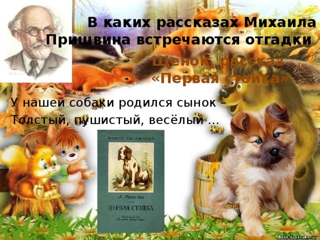 В каких рассказах Михаила Пришвина встречаются отгадки Щенок, рассказ «Первая стойка» У нашей собаки родился сынок – Толстый, пушистый, весёлый ...