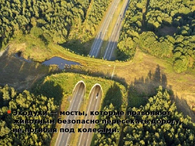 Экодуки— мосты, которые позволяют животным безопасно пересекать дорогу, непогибая под колесами.