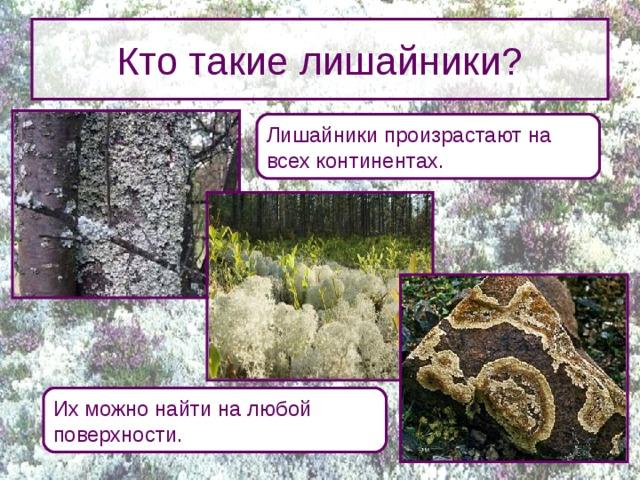 Кто такие лишайники? Лишайники произрастают на всех континентах. Лишайники – своеобразная группа живых организмов, произрастающих на всех континентах, в том числе и в Антарктиде. Лишайники можно найти на любой поверхности: на камнях, на стволах деревьев, на почве, на крышах и даже на бетонных столбах. Их можно найти на любой поверхности.