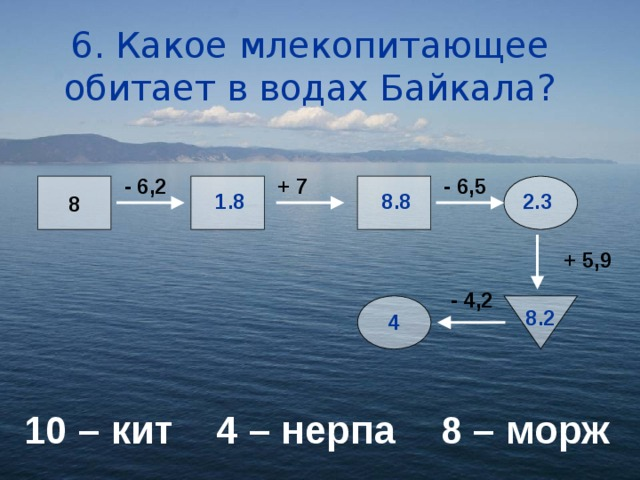 6. Какое млекопитающее обитает в водах Байкала? + 7 - 6,5 - 6,2 8 1.8 8.8 2.3 + 5,9 - 4,2 8.2 4 10 – кит  4 – нерпа  8 – морж