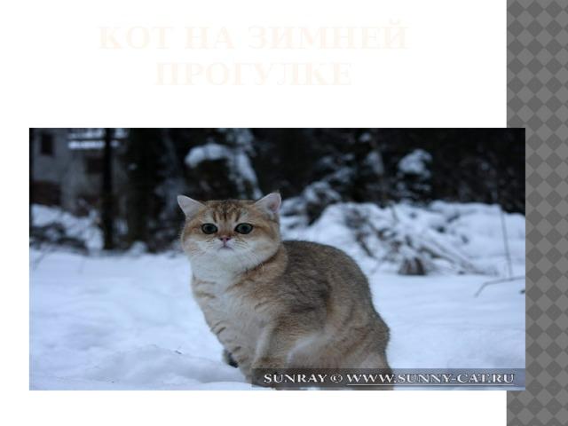 Кот на зимней прогулке
