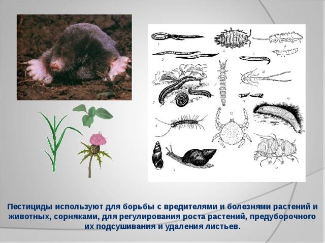 Пестициды используют для борьбы с вредителями и болезнями растений и животных, сорняками, для регулирования роста растений, предуборочного их подсушивания и удаления листьев.
