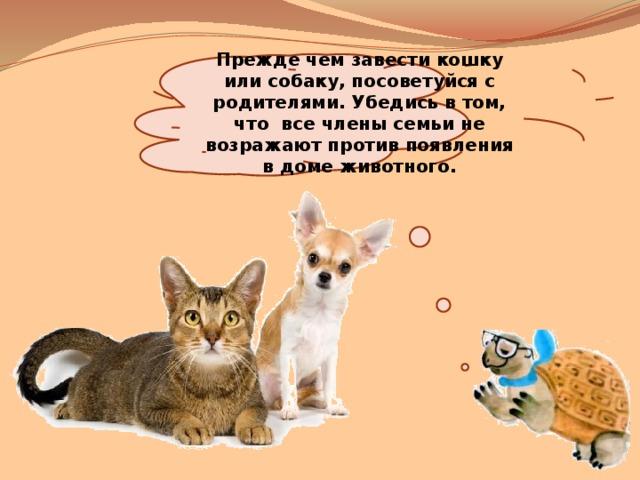 Прежде чем завести кошку или собаку, посоветуйся с родителями. Убедись в том, что все члены семьи не возражают против появления в доме животного.