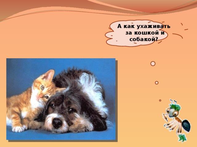 А как ухаживать за кошкой и собакой?