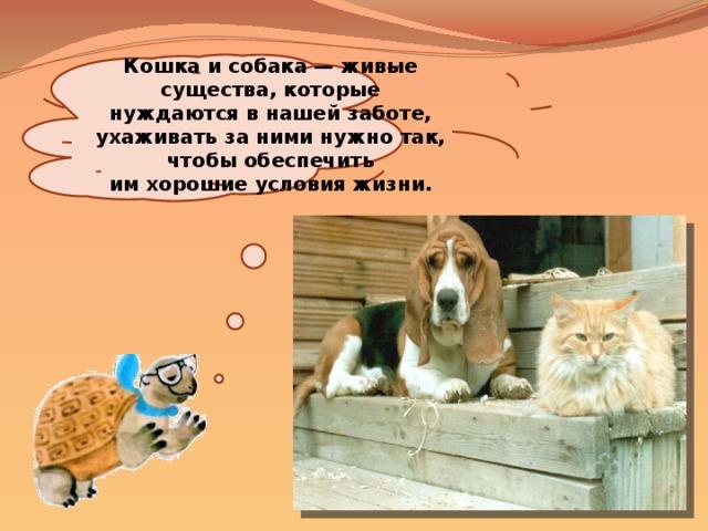 Кошка исобака— живые существа, которые нуждаются внашей заботе, ухаживать заними нужно так, чтобы обеспечить имхорошие условия жизни.