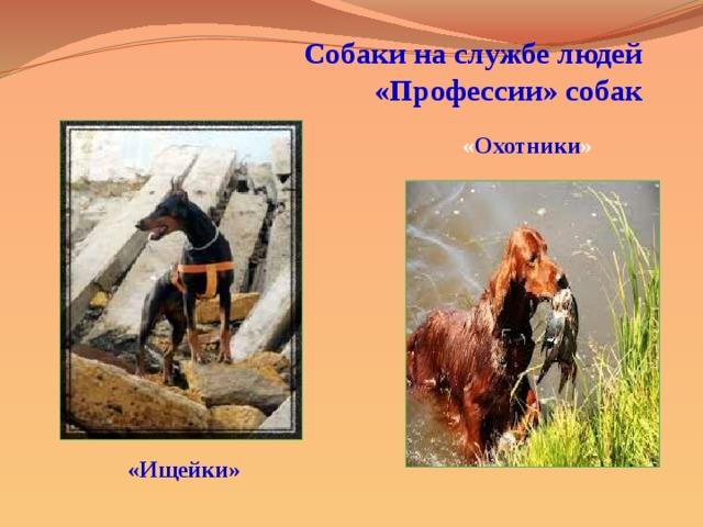 Собаки на службе людей  «Профессии» собак « Охотники » «Ищейки»