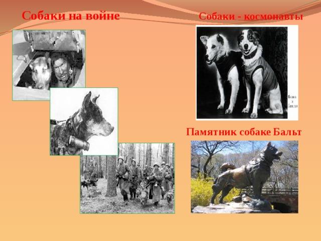 Собаки на войне Собаки - космонавты Памятник собаке Бальт