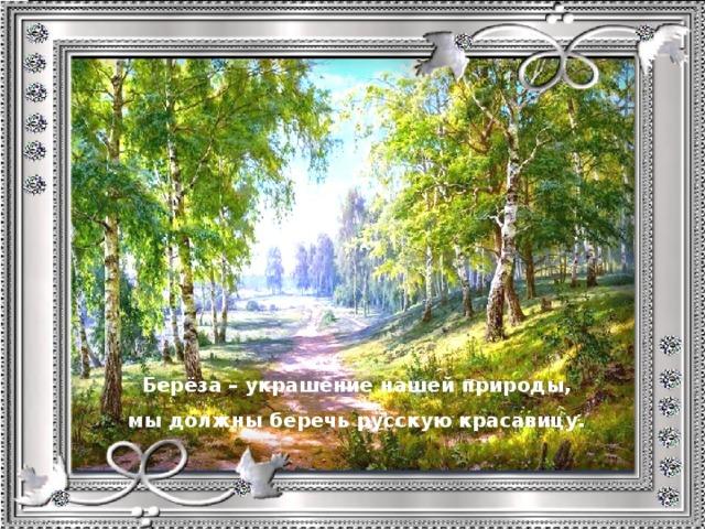 Берёза – украшение нашей природы, мы должны беречь русскую красавицу.
