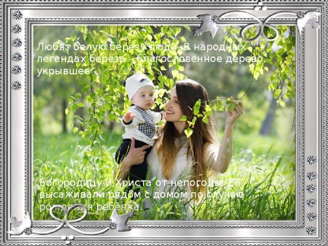 Любят белую берёзу люди. В народных легендах берёза – благословенное дерево, укрывшее Богородицу и Христа от непогоды. Её высаживали рядом с домом по случаю рождения ребёнка.