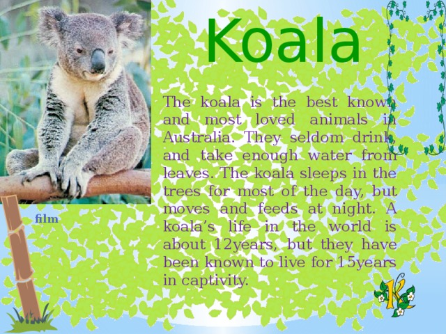 Koala The koala is the best known and most loved animals in Australia. They seldom drink, and take enough water from leaves. The koala sleeps in the trees for most of the day, but moves and feeds at night. A koala's life in the world is about 12years, but they have been known to live for 15years in captivity.  film