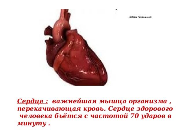 Сердце : важнейшая мышца организма , перекачивающая кровь. Сердце здорового человека бьётся с частотой 70 ударов в минуту .