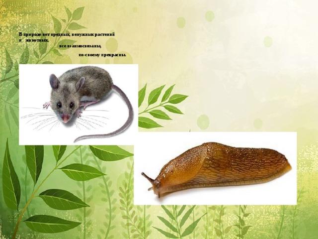 В природе нет вредных, ненужных растений  и животных,  все взаимосвязаны,  по-своему прекрасны. .