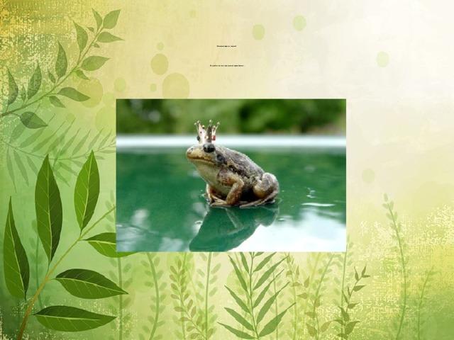 Настоящая царевна - лягушка!              Не случайно так часто люди делают её героиней сказок.