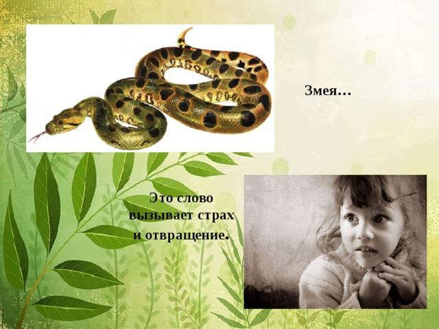 Змея…       Это слово  вызывает страх  и отвращение .