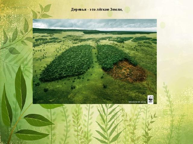Деревья - это лёгкие Земли,           зелёное ожерелье планеты.