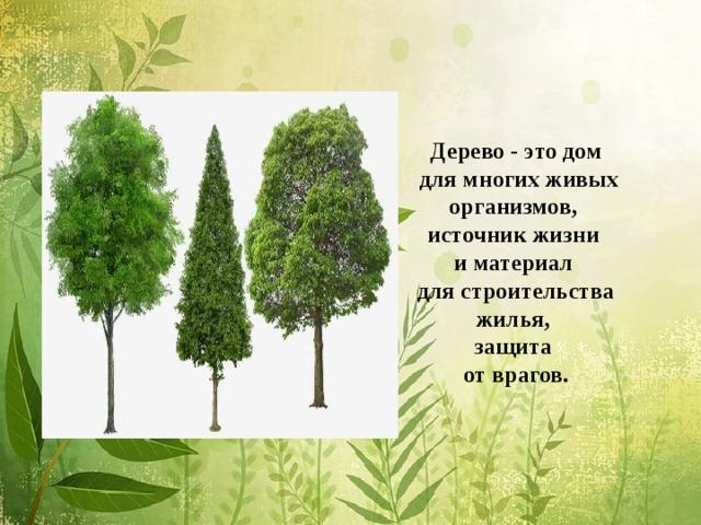 Дерево - это дом  для многих живых организмов, источник жизни и материал для строительства жилья, защита от врагов.