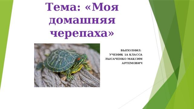 Тема: «Моя домашняя черепаха» ВЫПОЛНИЛ: УЧЕНИК 1А КЛАССА  ЛЫСАЧЕНКО МАКСИМ  АРТЕМОВИЧ
