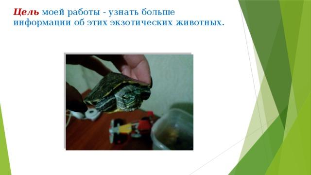 Цель  моей работы - узнать больше информации об этих экзотических животных.