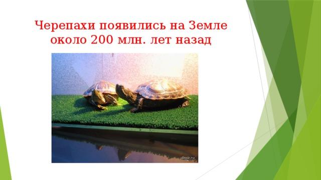 Черепахи появились на Земле около 200 млн. лет назад