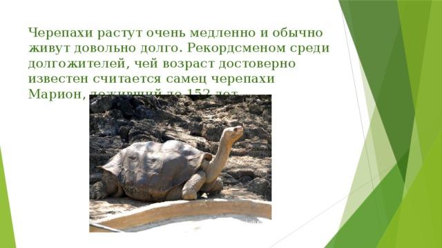 Черепахи растут очень медленно и обычно живут довольно долго. Рекордсменом среди долгожителей, чей возраст достоверно известен считается самец черепахи Марион, доживший до 152 лет.