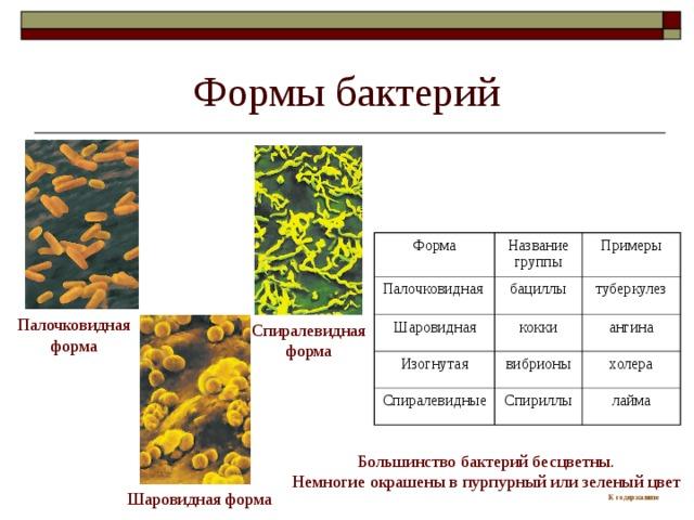 Формы бактерий Форма Палочковидная Название группы Шаровидная бациллы Примеры Изогнутая туберкулез кокки Спиралевидные ангина вибрионы холера Спириллы лайма Спиралевидная форма Палочковидная форма Большинство бактерий бесцветны. Немногие окрашены в пурпурный или зеленый цвет К содержанию Шаровидная форма