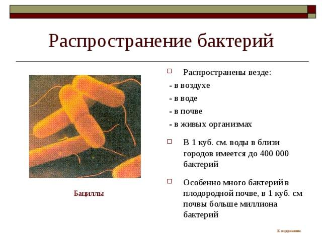 Распространение бактерий Распространены везде:  - в воздухе  - в воде  - в почве  - в живых организмах В 1 куб. см. воды в близи городов имеется до 400 000 бактерий  Особенно много бактерий в плодородной почве, в 1 куб. см почвы больше миллиона бактерий Бациллы К содержанию