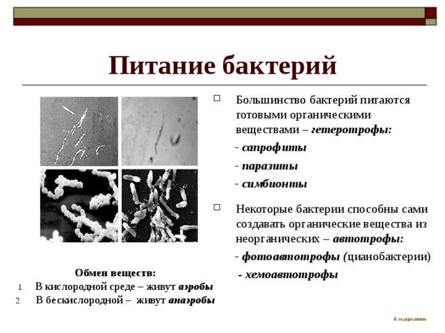 Питание бактерий Большинство бактерий питаются готовыми органическими веществами – гетеротрофы:  - сапрофиты  - паразиты  - симбионты  Некоторые  бактерии способны сами создавать органические вещества из неорганических – автотрофы:  - фотоавтотрофы ( цианобактерии)  - хемоавтотрофы Обмен веществ: В кислородной среде – живут аэробы  В бескислородной – живут анаэробы К содержанию