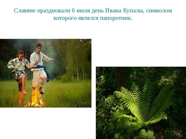Славяне праздновали 6 июля день Ивана Купалы, символом которого являлся папоротник.