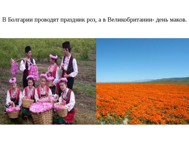 В Болгарии проводят праздник роз, а в Великобритании- день маков.