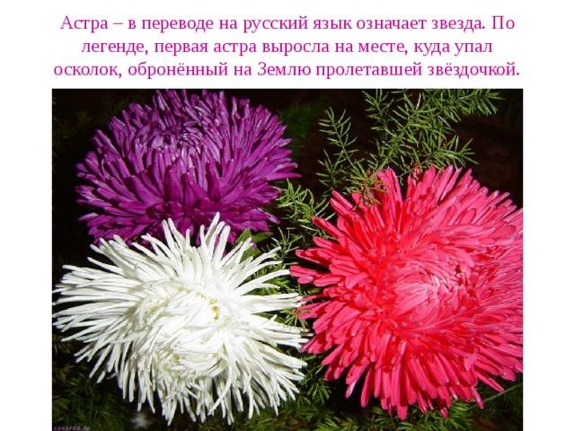 Астра – в переводе на русский язык означает звезда. По легенде, первая астра выросла на месте, куда упал осколок, обронённый на Землю пролетавшей звёздочкой.