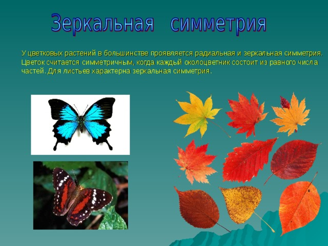 У цветковых растений в большинстве проявляется радиальная и зеркальная симметрия. Цветок считается симметричным, когда каждый околоцветник состоит из равного числа частей. Для листьев характерна зеркальная симметрия.