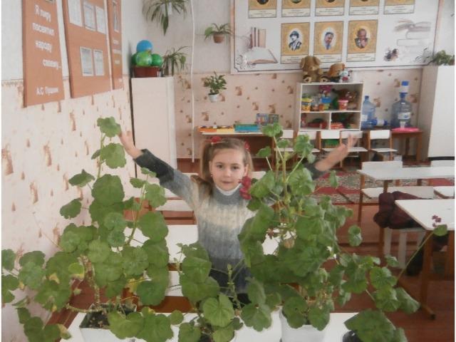 Мой цветок вырос и скоро зацветет.  В нашем классе нет больше моли, паучков и очень свежий воздух.
